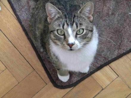 Piegus Kot szuka domu