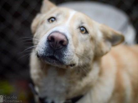 Marcel  młody  wyjątkowo piękny pies szuka domu!