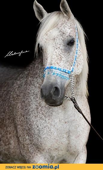 Kupię konia