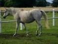'Kupię konia
