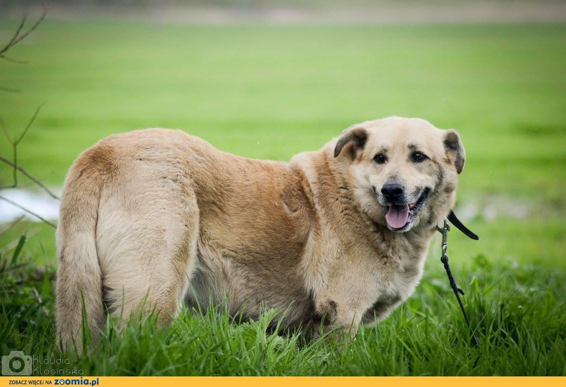 Dex, przeszedł piekło, a nadal kocha___Wspaniały pies szuka domu!