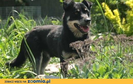 Mokasik, mały przyjazny pies,  śląskie Katowice