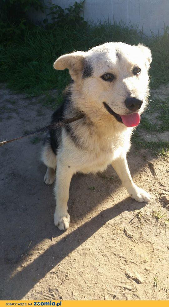 Aleks, młody, niekonfliktowy pies czeka na rodzinę która go pokocha!