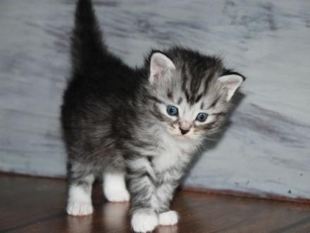 Jagna kotka syberyjska