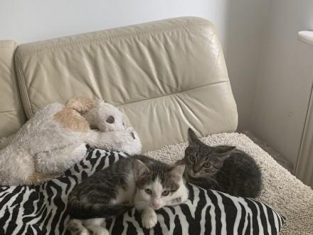 KOT: Dwa koteczki pilnie potrzebują domu