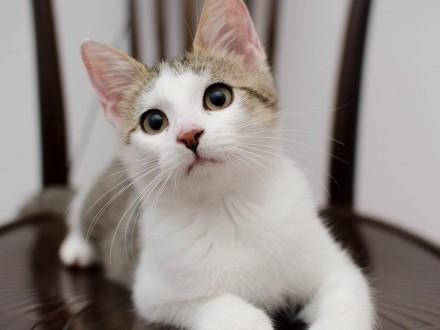 KOT: Cudny Kminek z Fundacji Miasto Kotów - wyrzucony w pudełku  czeka na dom