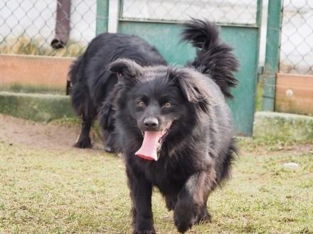 Lolek-piękny pies szuka swoich ludzi!