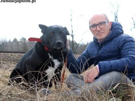 Merlin - przyjaznego psa do adopcji poleca Andrzej Krzywy