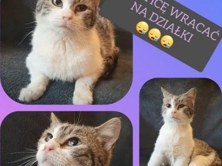 ROZALKA - 1 5 roczna  spokojna  łagodna koteczka pilnie szuka domu!