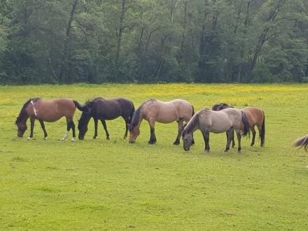 konie do hipoterapii