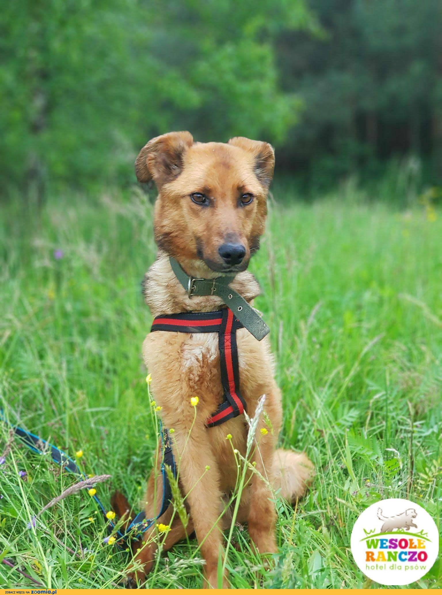 Fado, niekonfliktowy, nieśmiały psiak szuka ludzi o wielkim sercu!