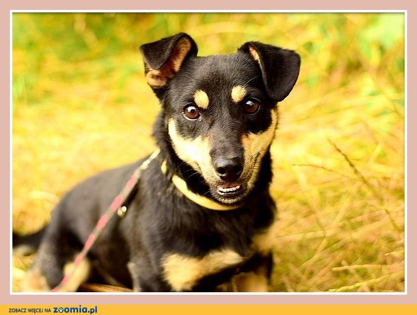 Mały 8 kg, grzeczny,sympatyczny, wesoły, przyjazny psiak KATER_Adopcja