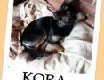 KORA,przekochana,średnia 11 kg,przyjazna,grzeczna,3 letnia sunia.Adopcja.,  łódzkie Łódź