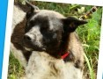 Delikatny,łagodny psiak FENEK,mały,cichy,spokojny_Adopcja