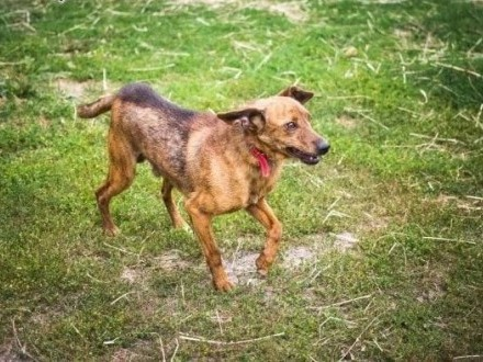 Rupi - niewielki i zrównoważony psiak wciąż czeka na swój dom   Kundelki cała Polska