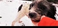 DROPSIK ;#8211; 2-letni  kochany  wrażliwy psiak błaga o dom!   łódzkie Łódź