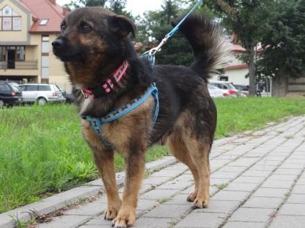 Niewielki  Aleksander, spokojny, lubiący dzieci psy i koty, pies IDEAŁ