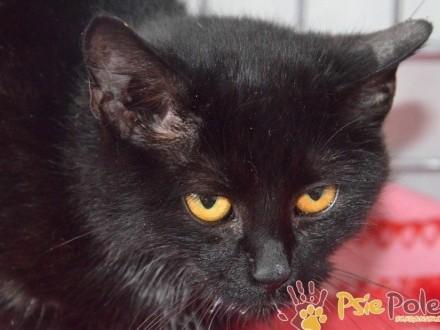 TALIA-młoda koteczka po operacji zwieracza szuka domu  adopcja