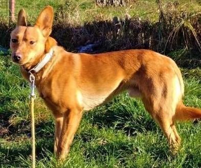 MIKUŚ - 2 letni  delikatny i wrażliwy psiak szuka domu