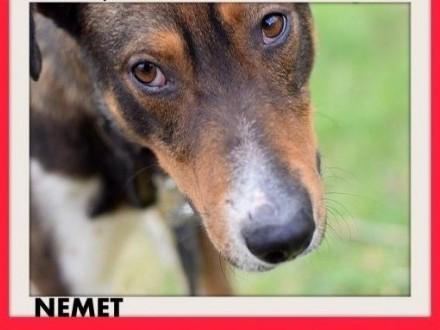 NEMET chart mix młody łagodny wesoły  pies do adopcji   mazowieckie Warszawa
