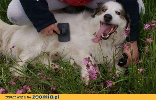 Marzę sobie, ze mnie adoptujesz...Jestem Amor, młody, grzeczny psiak!,  Kundelki cała Polska