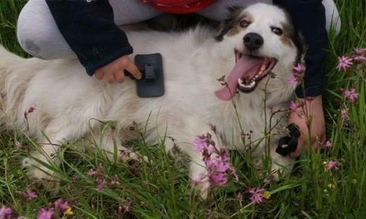 Marzę sobie  ze mnie adoptujeszJestem Amor  młody  grzeczny psiak!   Kundelki cała Polska