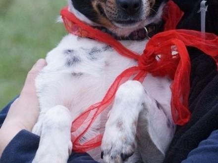 Malinka typ psa myśliwskiego szuka domu!   Kundelki cała Polska