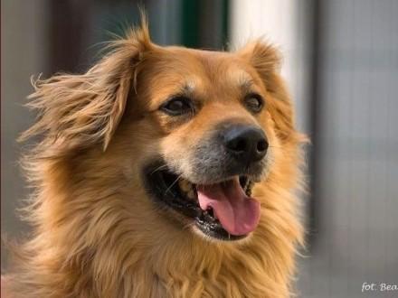 Kastor - prosimy o dom dla tego pięknego psa
