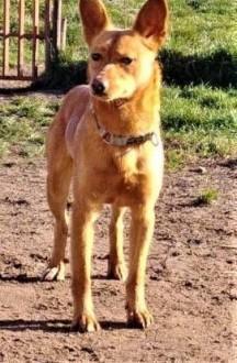 MIKUŚ - 2 5 letni  delikatny i wrażliwy psiak szuka domu   mazowieckie Warszawa