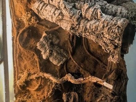 Terrarium pionowe Wystrój tropikalny z system zraszania 30x30x60