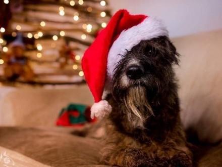Londi to pies wspaniały i doskonały