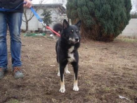 Piorun super przyjacielski psies   dolnośląskie Jelenia Góra