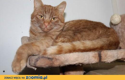Charakterny rudasek Vampo szuka domu!,  dolnośląskie Głogów