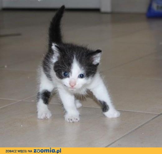 Świeże Ogłoszenia: oddam kota, oddam kocięta – Koty i kociaki szukają HS96