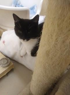 12 miesięczna Mela, cudna koteczka do adopcji