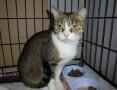 2 letnia kotka Kloe szuka domu