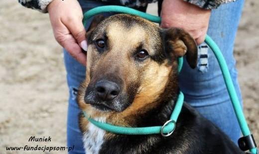 Muniek - wspaniały psiak   mazowieckie Nowy Dwór Mazowiecki