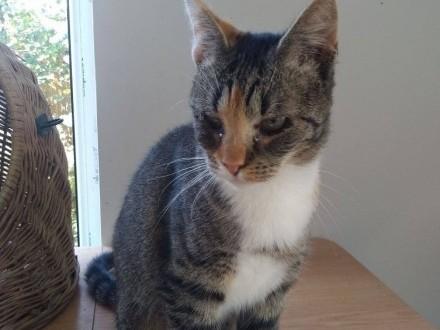 MELA - lepszej nie znajdziecie  to najlepszy kot na świecie!