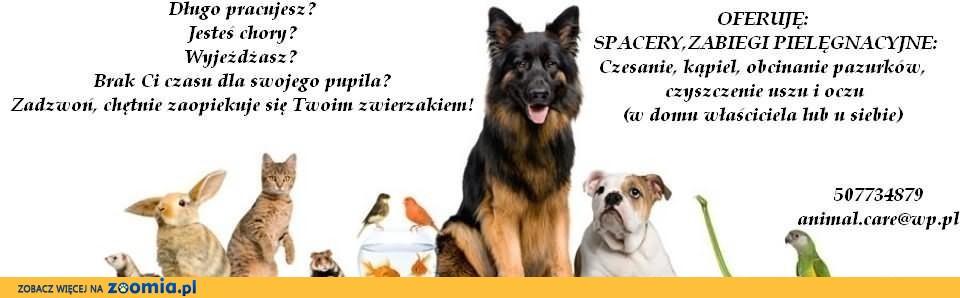 opieka nad zwierzętami