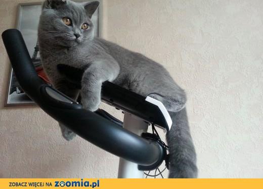 Inteligentny Ogłoszenia: oddam kota, oddam kocięta – Koty i kociaki szukają AS68