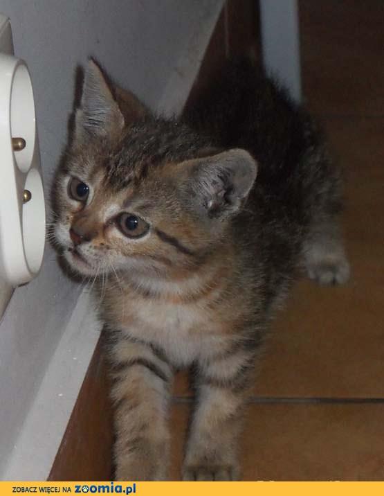 Uratowane kociaki szukają domów!