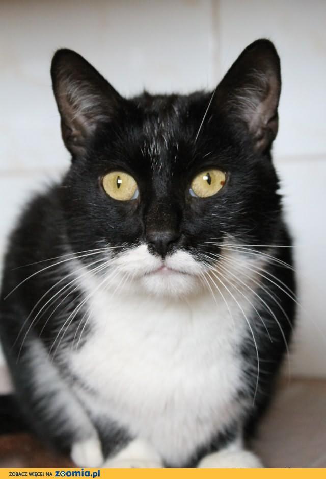 Kochany, domowy kot szuka nowego domu