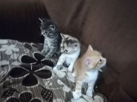 koty Kocurek i kotki ! Cudowne Piękne Urocze cudowne domowe?kolbuszowej ??