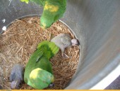 kakadu, papugi i inne jaja