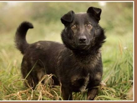 10 kg sympatyczny towarzyski czarny kundelek BILBO_Adopcja