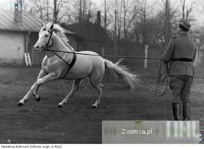 Układanie młodych i trudnych koni