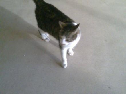 Zaginęła kotka Kira