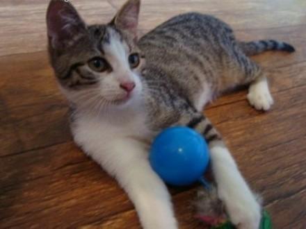 4-miesięczna kotka do adopcji   lubelskie Lublin