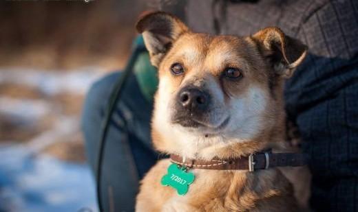 Niko kochany mikro psiak pilnie szuka domu!   podkarpackie Boguchwała