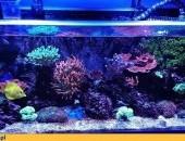 Akwarium morskie na zamówienie Kielce rafa koralowa w Twoim domu